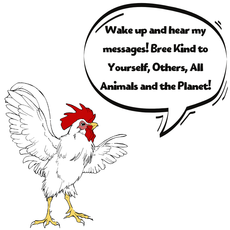 wake up with bree the rescue rooster